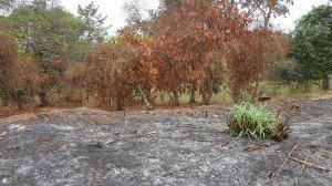 Les flammes sont passées par là. (Photo V.T.)
